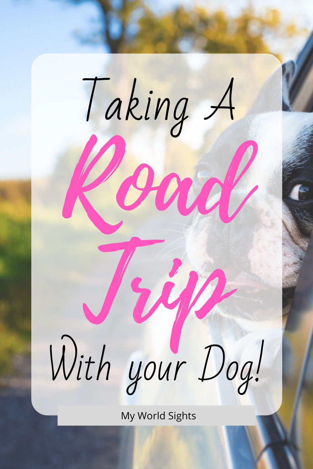 taking a long road trip with your dog